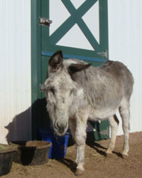 Flower the Donkey