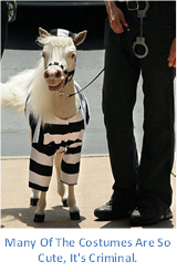 Gentle Carousel Therapy Horse are Dressed Up in Stripes.
