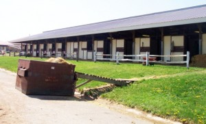 Horse Stalls at the Track - Inside Track on Horse Racing