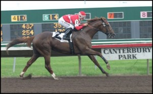 Jockey on chesnut racehorse