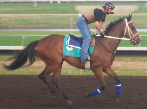 Rider and Horse Training - Inside Track on Horse Racing