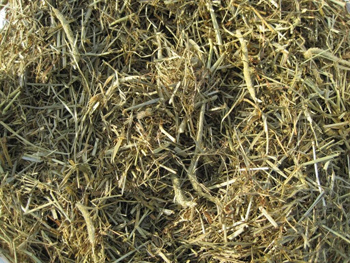 Triple Crown Nutrition Grass Forage Image