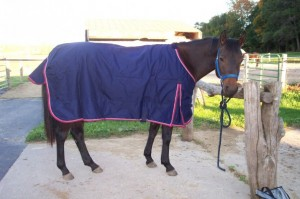 blanketed bay horse