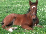 2015 Cutest Foal Contest