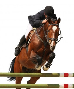Jumping Horse Image
