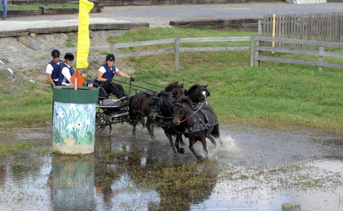woman driving carriage through water pulled by 4 bay horse