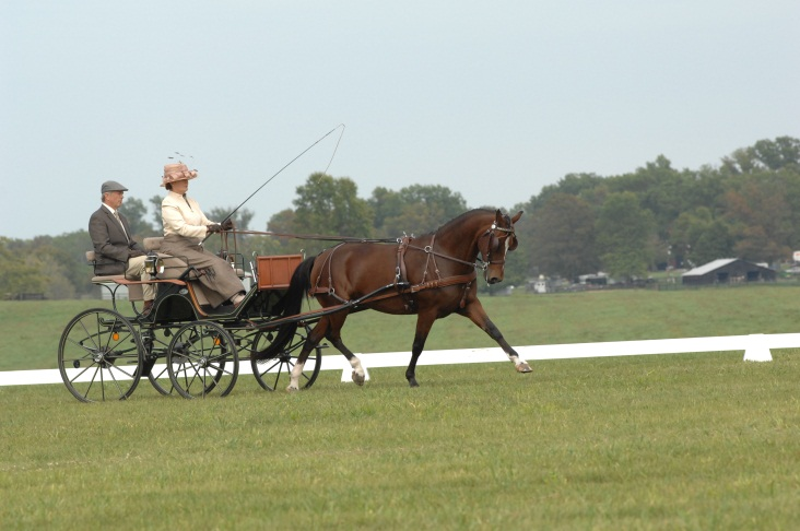 woman and man driving single horse carriage