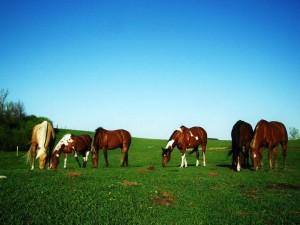 horse-managing