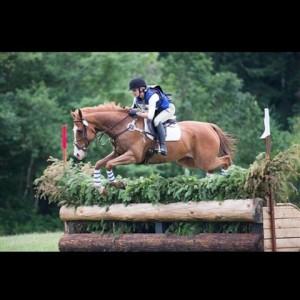 girl jumping chesnut horse over brush fence