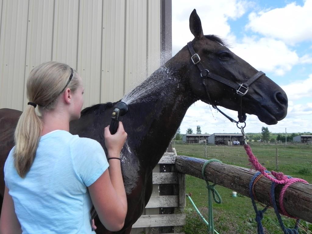 girl bathing black horse