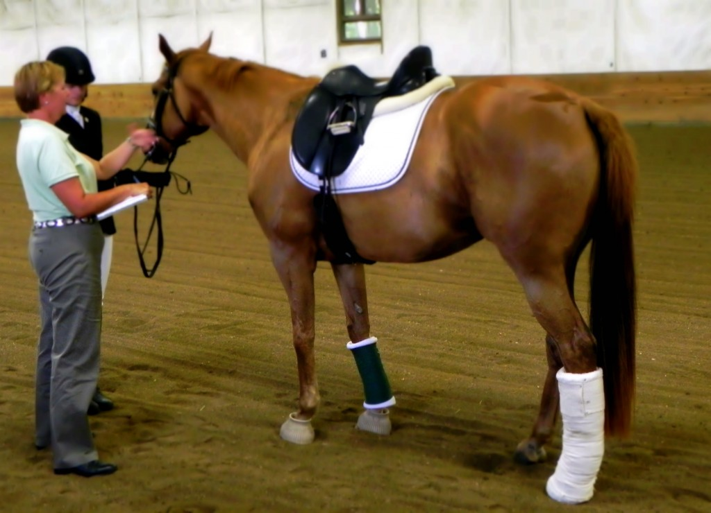 Stable Wraps Post Exercise Horse Care Triple Crown Feed