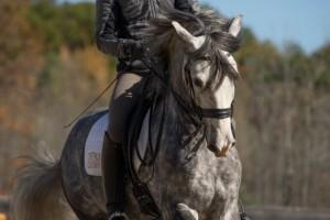 Casa Arte Equestre Triple Crown Feed