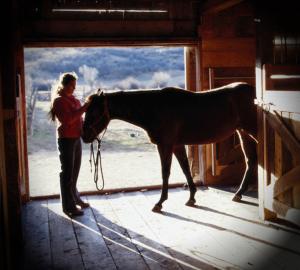 woman petting horses head
