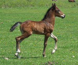 Understanding Electrolytes For Horses - Triple Crown Feed