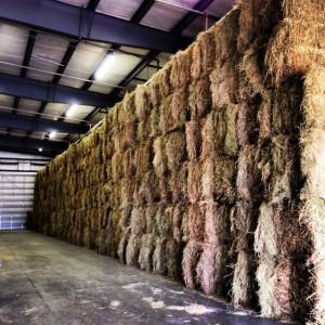 Stacks of hay bales
