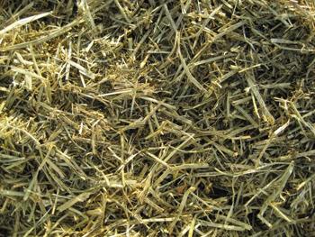 premium alfalfa forage blend   triple crown feed