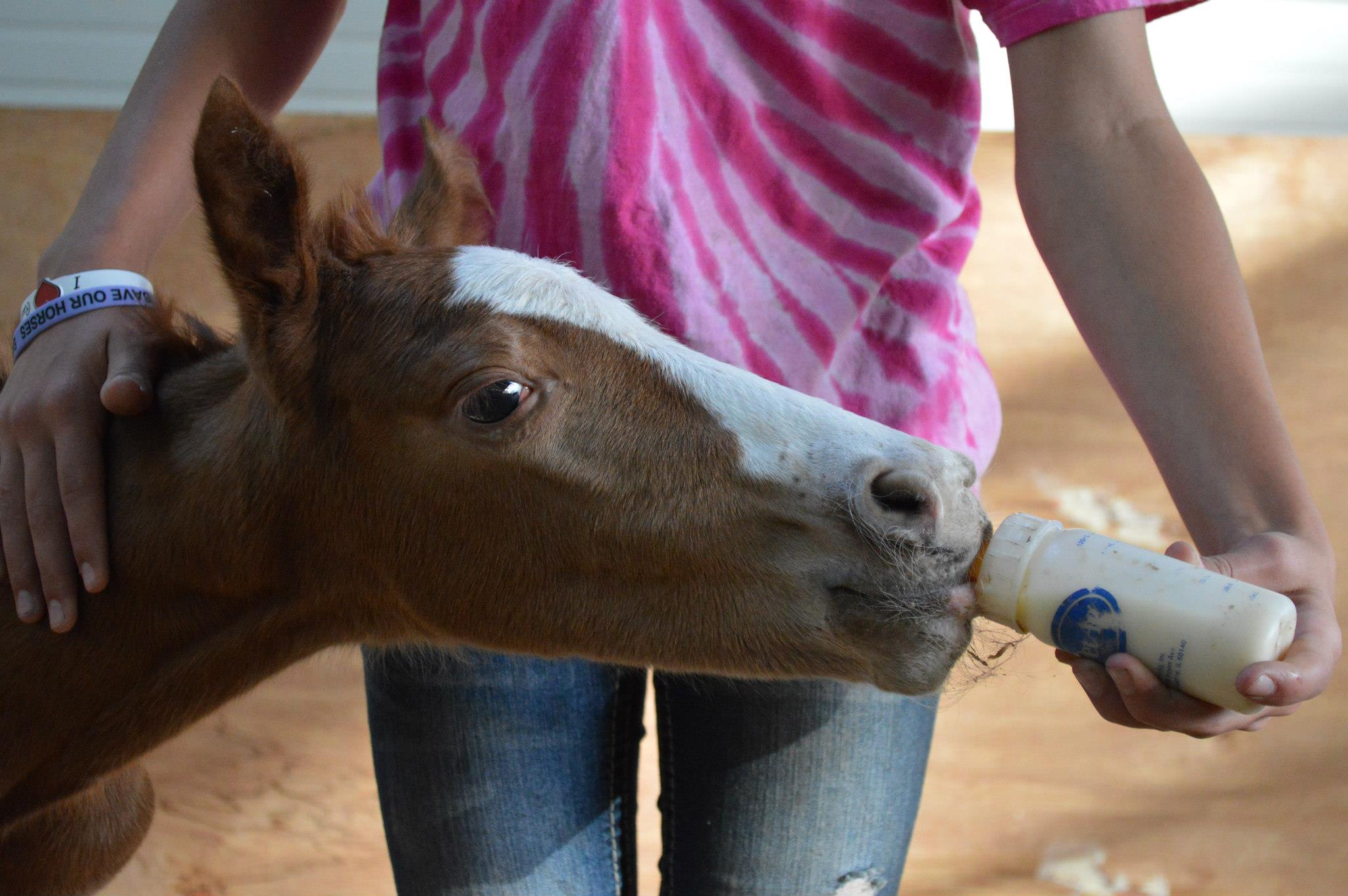 Woman bottle feeding foal