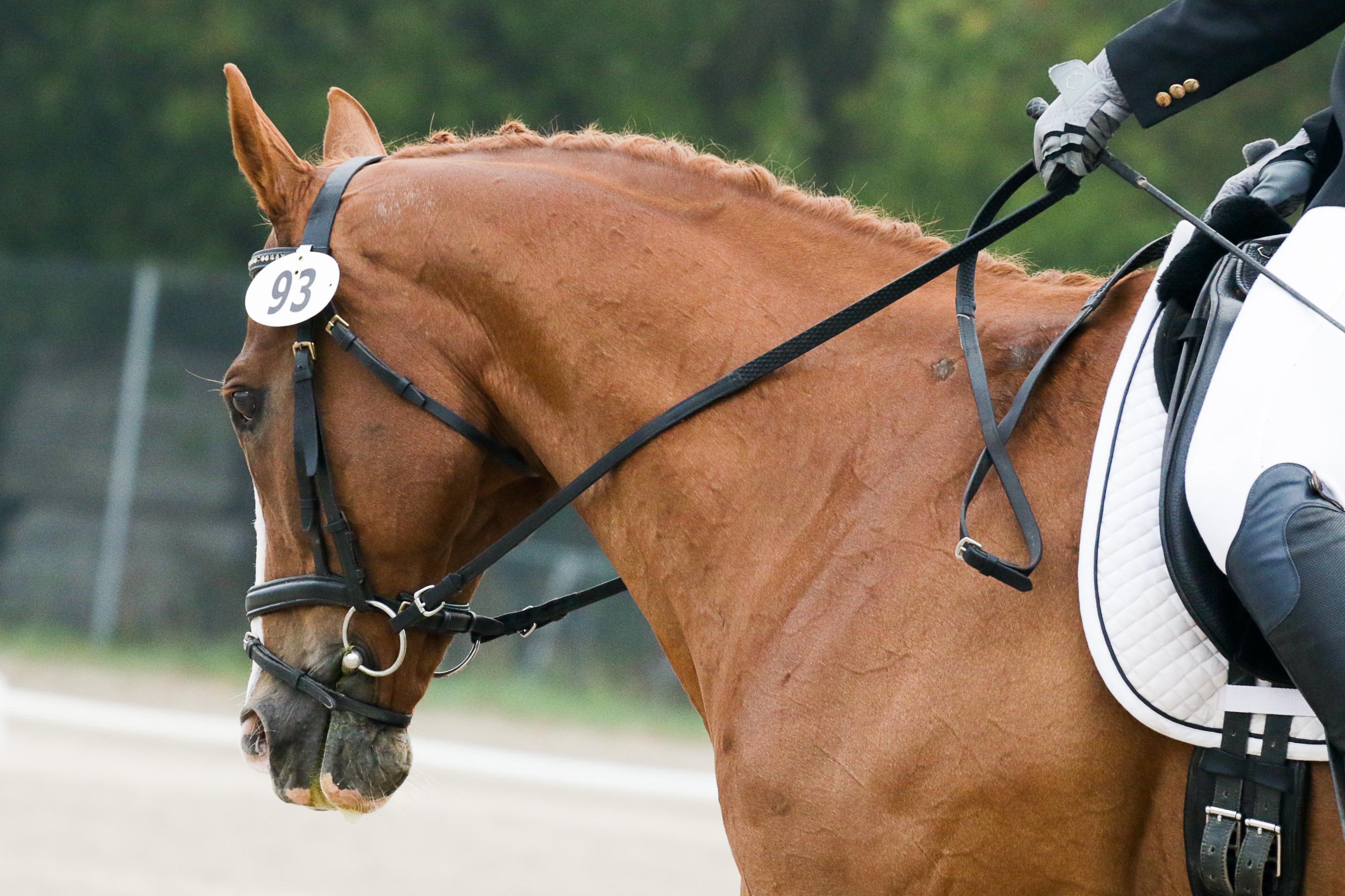 chesnut dressage horse