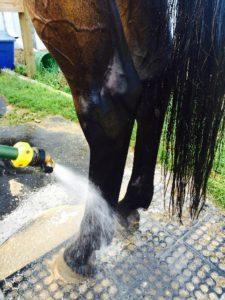 hose spraying bay horses rear legs