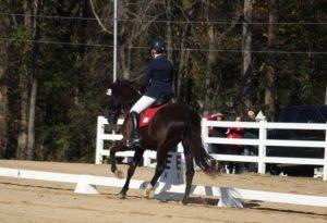 woman on black dressage horse