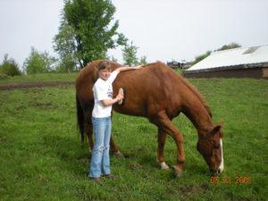 Young girl brushing sorrel horse