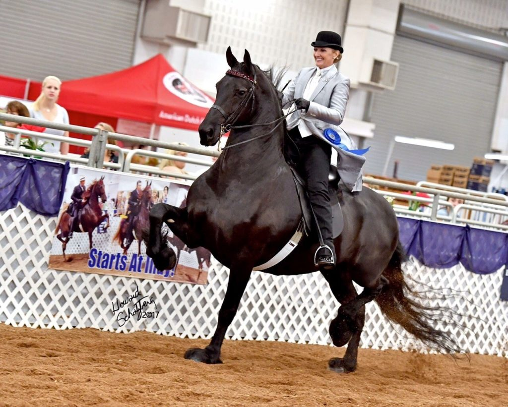 woman riding black friesian