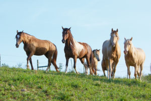 5 horses standing in pasture