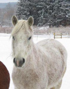 White mare in winter