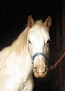 white mare