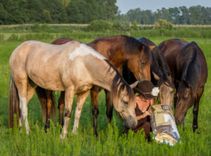 Woman surrounded by horses in pasture
